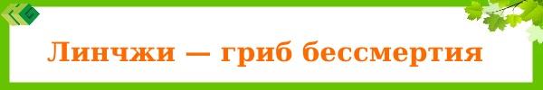 linchgi_grib_bessmertiya